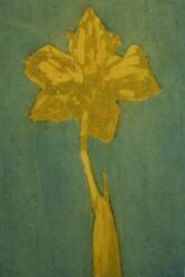 Daffodil study I (green/yellow)