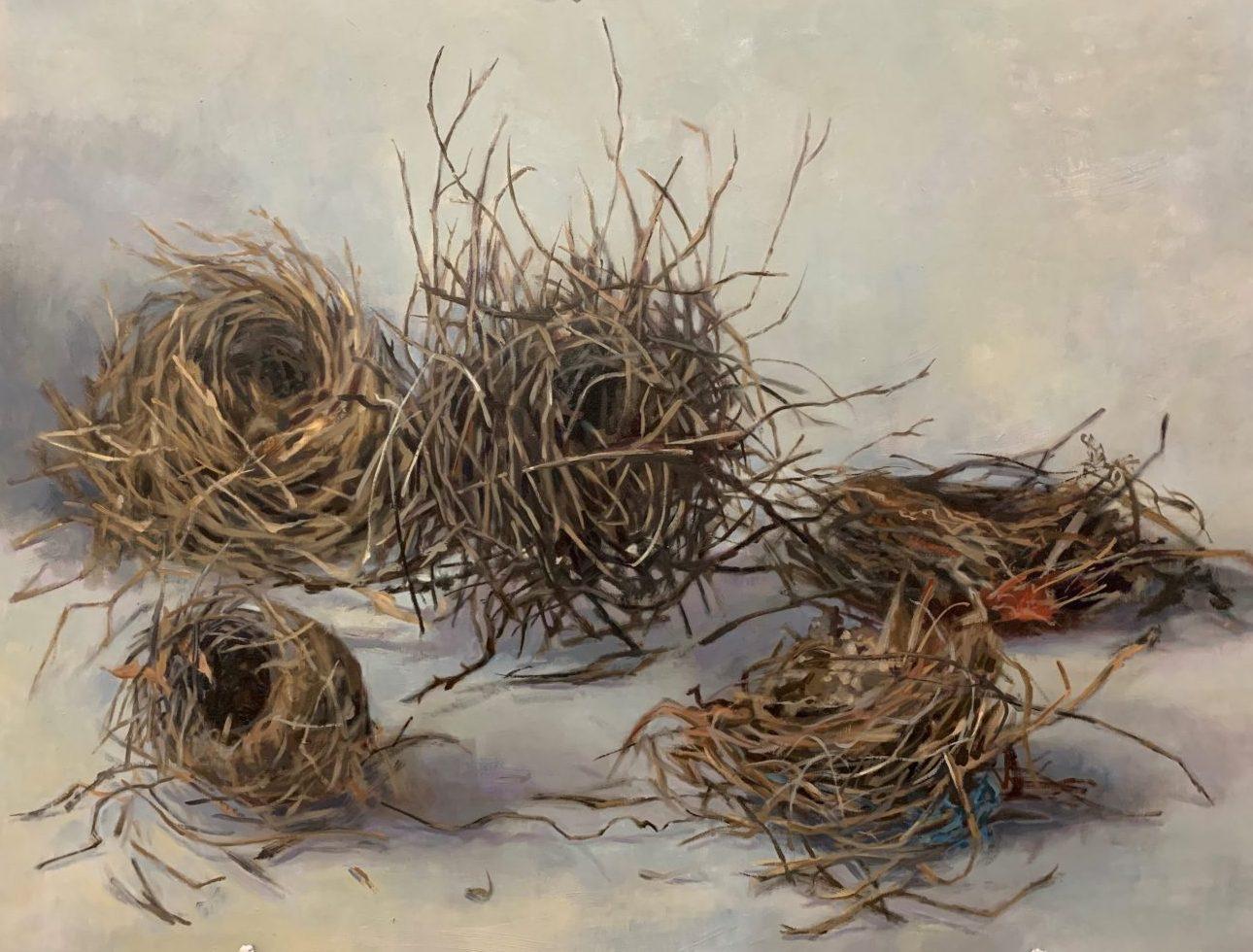 5 nests habitat 101