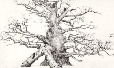 Fredville Oak