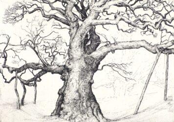 Birnam Oak II