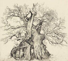 Rumskulla Oak, offering