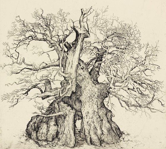 Rumskulla Oak, offering