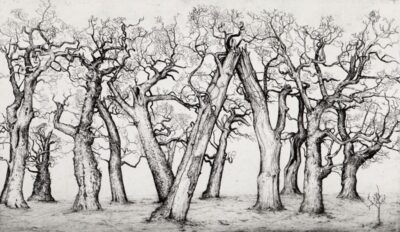 Trees of passage, Cadzow