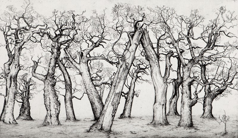 Trees of passage, Cadzow
