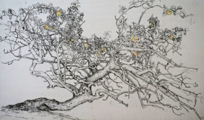 Apple tree, river Nybro