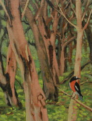 First study for, Landscape with George Raper's robins
