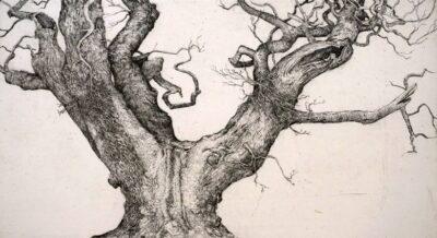 Covenanters Oak