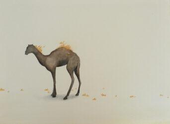 Burning camel