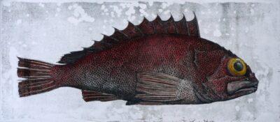 Deep sea perch