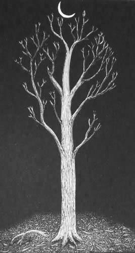 New leaf on the tree – love