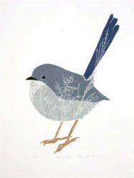 Fairy-wren