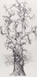 Large Cromwells Chestnut
