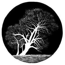 Tree – Pink Lakes