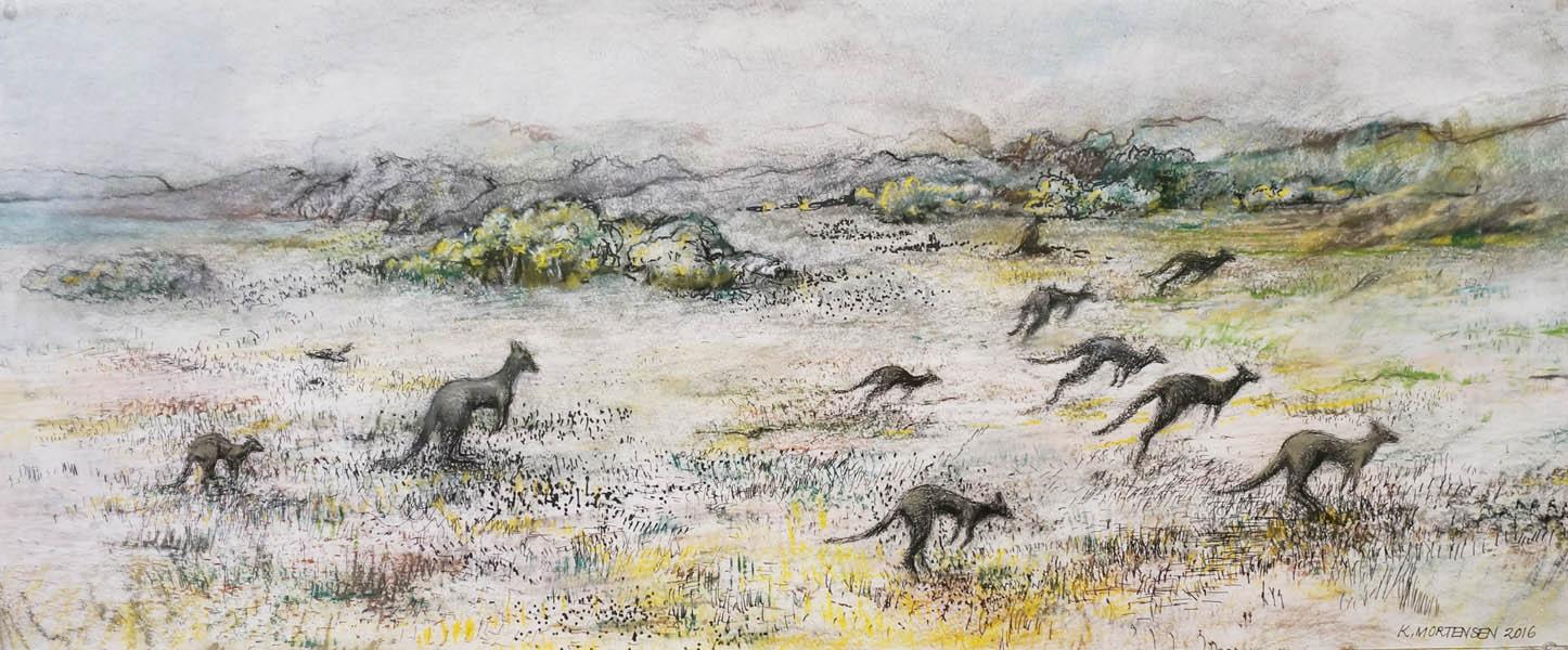 Venus Bay Kangaroos