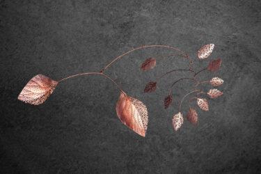 Roots reach into piles of skeleton leaves below