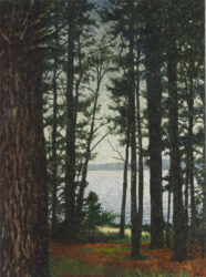 Pine grove and sea