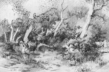 Coastal bush