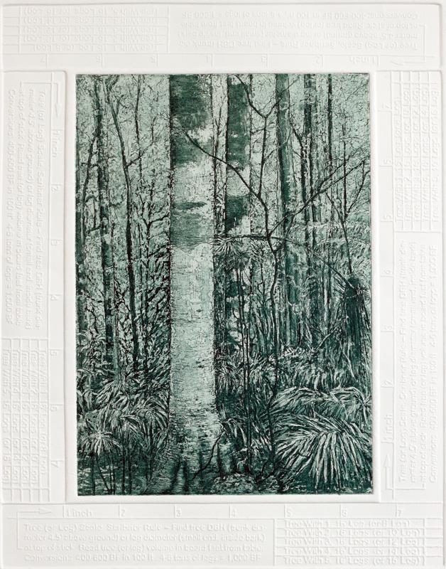 Log forest 4 – Washpool, NSW