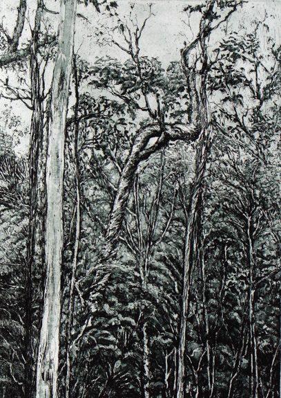 Log forest 2 – Coolangubra, NSW