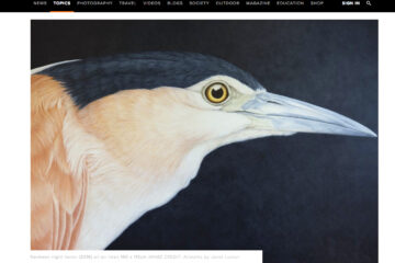 Australian Geographic on the beautiful paintings of Janet Luxton