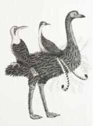 Australian chimera #8
