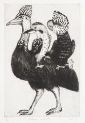 Australian chimera #6