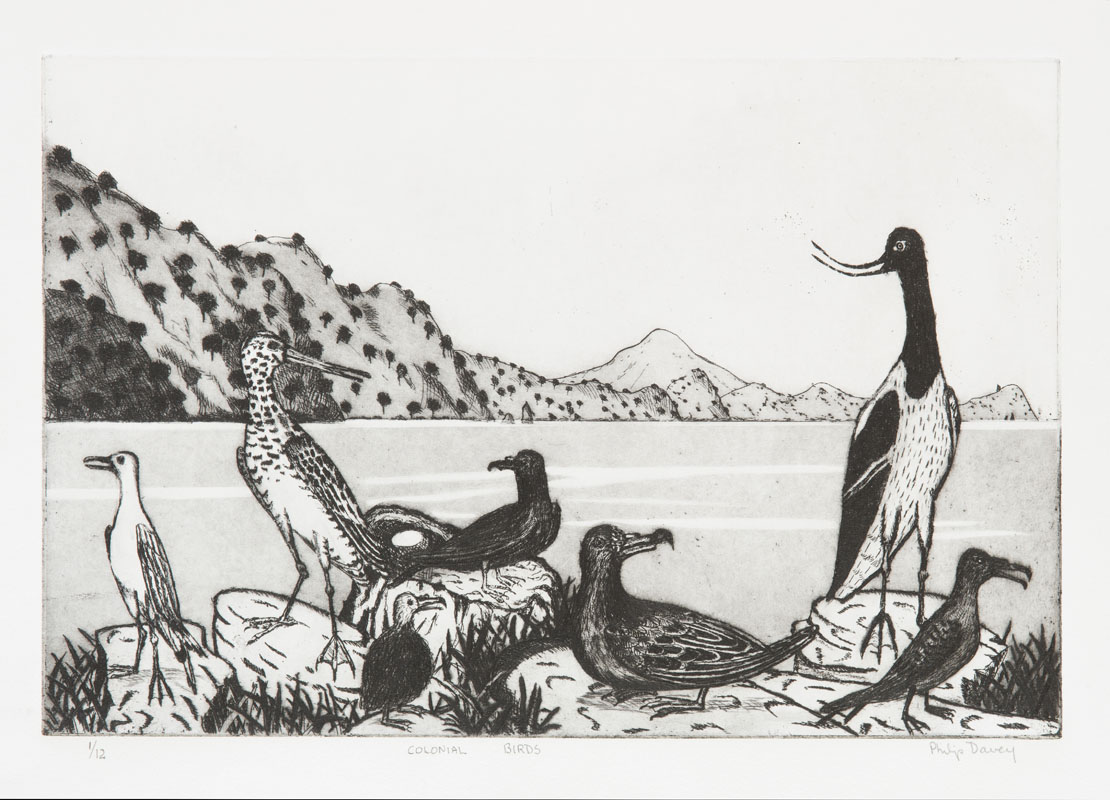 Colonial seabirds