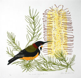 The Spinebill and the banksia