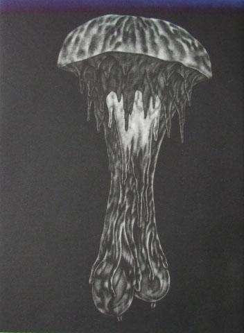 Old man jellyfish