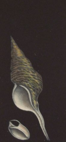 Conical shell