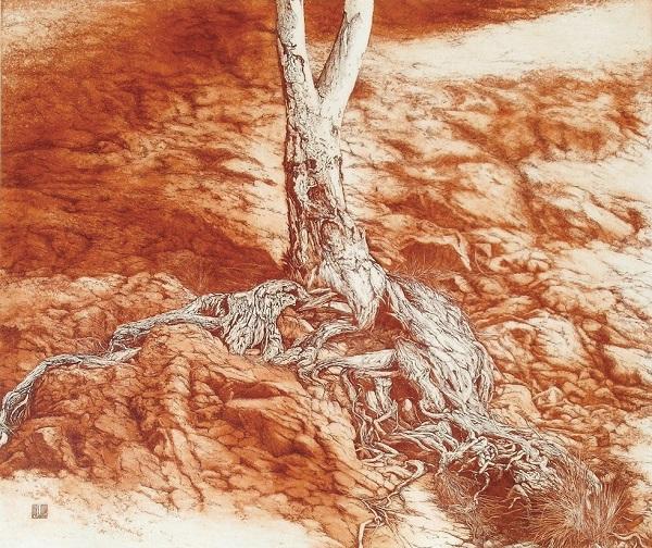 Tree Root, Flinders Ranges