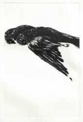 Dead birds III