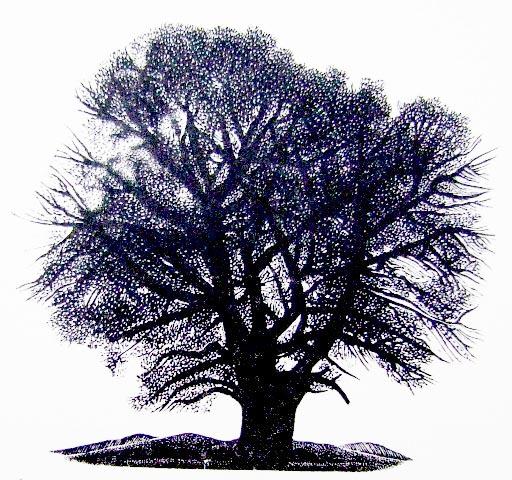 Tree – Malmsbury