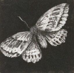 Moth #12