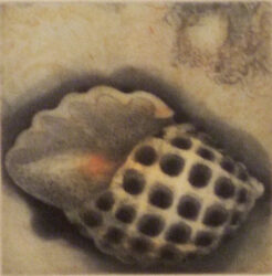 Shell (b/w pattern) (517)