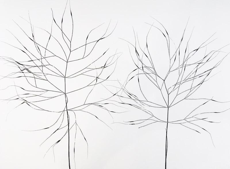 Grass VI