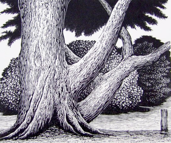 Tree – Inverloch