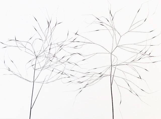 Grass IV