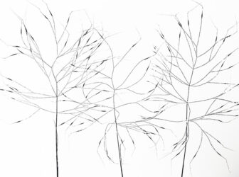 Grass V