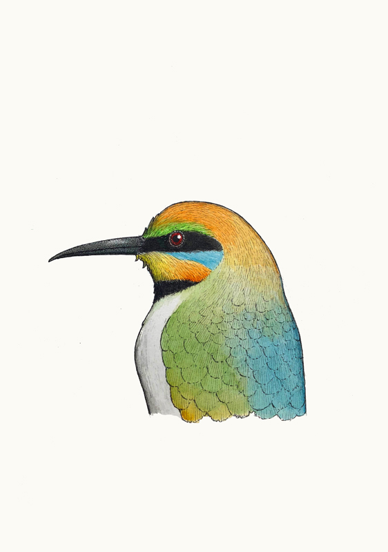 Portrait of a Rainbow Bee-eater