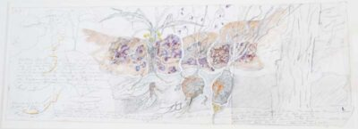 Study for, Dhuŋguruk, Butjuwutju/Mona and Djitama – edible tubers of East Arnhem Land