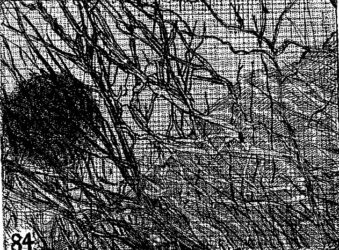Elsewhere world fragment No. 84 (2nd State)