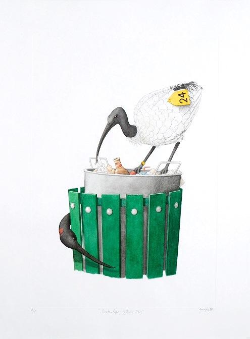 Australian White-Ibis