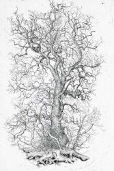 Again tree, Elm