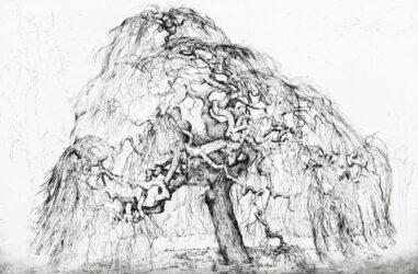 Weeping tree, Elm
