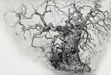 Wild tree, Sweet Chestnut
