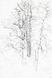 Skeleton tree, Elms