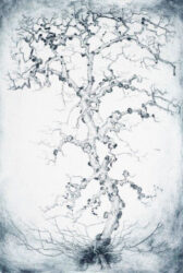 Spot tree, Elm