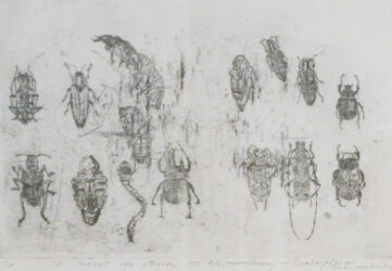 101 Insect Life Stories No. 40: Coleoptera