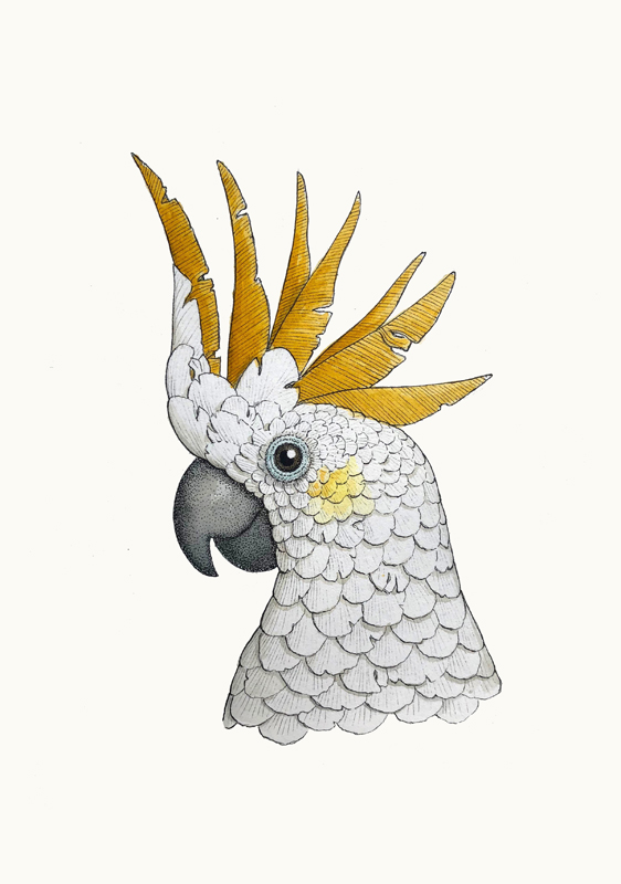 Portrait of a Sulphur-crested cockatoo